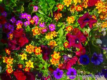 Gardening: Everything is a riot of colour thanks to sunshine