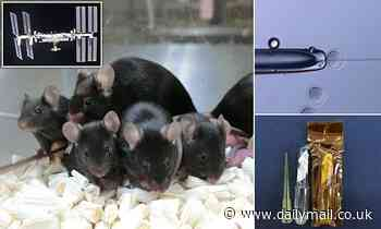 Freeze-dried mouse sperm remains viable after being in space for almost six YEARS