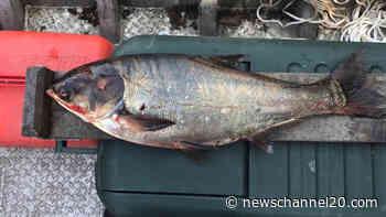 Asian carp species to receive new name - newschannel20.com