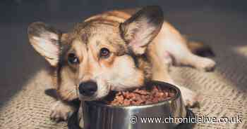 Dog owners urged to learn symptoms of potentially fatal illness GDV