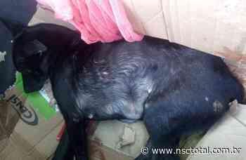 Cachorra é esfaqueada e morre após invadir galinheiro do vizinho em Gaspar | NSC Total - NSC Total