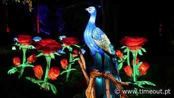 Jardim Botânico do Porto ilumina-se com espectáculo nocturno imersivo - Time Out