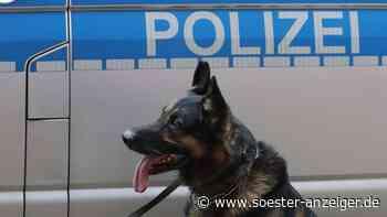 Vermisst bei Offenbach: Mann aus Rodgau verschwunden – Spürhund führt Polizei zum Erfolg - Soester Anzeiger