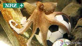 Die Fußball-Weisen aus Dinslaken und Voerde tippen die EM - NRZ News