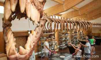 La ruta de los dinosaurios por La Rioja empieza en Enciso - Hola