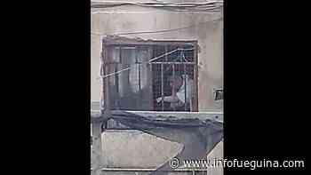 Denuncian en Río Grande serios maltratos a perros en un negocio canino - Infofueguina