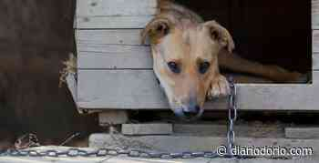 Acorrentar animais pode se tornar proibido no Rio de Janeiro - Diário do Rio de Janeiro