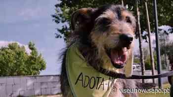 Município de Tondela continua a promover a adoção de animais - Diário Digital