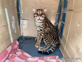 Liberan 50 animales silvestres en Guataquí, Cundinamarca   EL ESPECTADOR - El Espectador