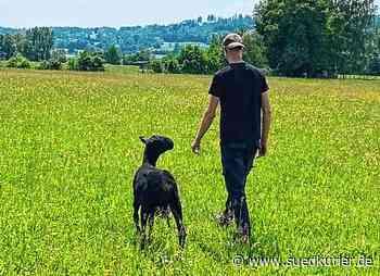 """Salem: Das """"Schwarze Schaf"""" als bester Freund: So erhalten Jugendliche eine zweite Chance - SÜDKURIER Online"""