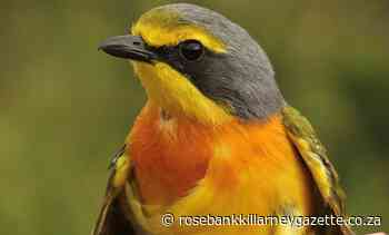 Travel options … weekends for birders and runners - Rosebank Killarney Gazette