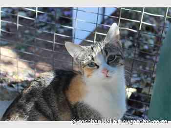 Adopt a pet from the Sandton SPCA - Rosebank Killarney Gazette