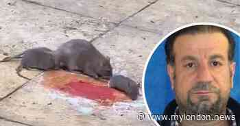 Enfield man says he's been housed in 'dungeon' with swarms of rats after his son was murdered - My London