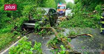 Braunfels: Baum fällt auf fahrendes Auto - Mittelhessen