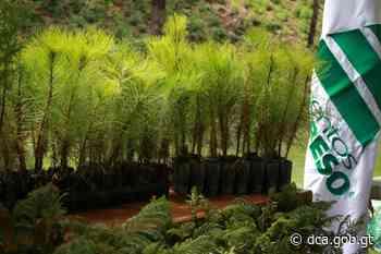 Cementos Progreso dona 106 mil árboles – Noticias Última Hora de Guatemala - dca.gob.gt