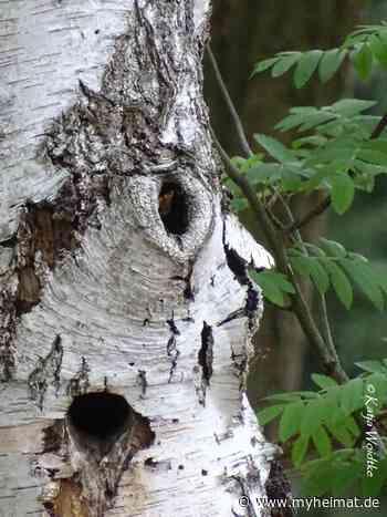 Baumgesichter - wenn Bäume sprechen könnten... - Langenhagen - myheimat.de - myheimat.de
