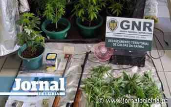 GNR da Benedita deteve três homens e apreendeu cocaína, haxixe, cannabis e armas de fogo - Jornal de Leiria