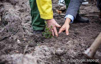 Fundação Cepsa apoia reflorestação do Pinhal de Leiria - Diário Digital