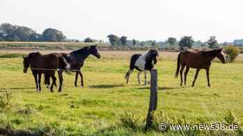 Kreis Helmstedt: Schrecklich! Mehrere Pferde misshandelt - News38