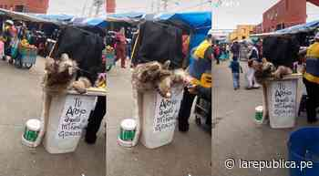 TikTok Viral: Hombre controla muñeco de rata gigante y se encarga de desinfectar a personas en un mercado - LaRepública.pe