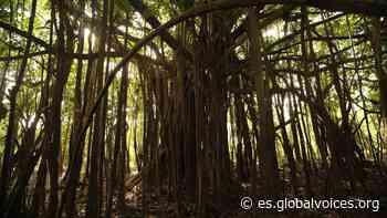 Indígenas denuncian extracciones de gigante petrolero chino en la selva amazónica del Perú - Global Voices en español