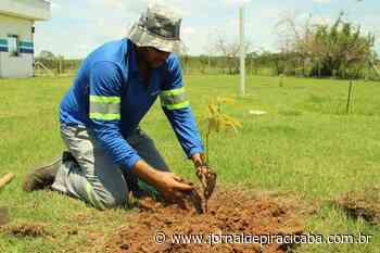 Colaborador completa mais de 100 árvores plantadas - jornaldepiracicaba.com.br