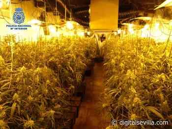 Apagan un incendio en el Puerto de Santa María y encuentran 223 plantas de marihuana - Digital Sevilla