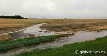 'Million-dollar rain' offers reprieve to Manitoba farmers, firefighters