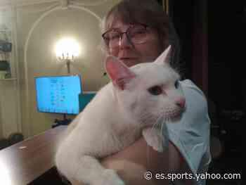 El gato ruso Aquiles pronostica la victoria de Italia sobre Turquía - Yahoo Eurosport ES