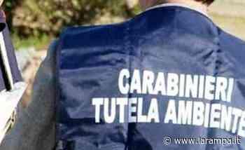 Controlli NOE a Torre Annunziata, Pompei e Castellammare di Stabia - La Rampa