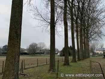 LENNIK - Waar of niet waar over de bomen die moeten gekapt worden - Editiepajot