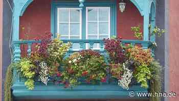 Balkon-Tipps: Welche Pflanzen für den Balkon absolut ungeeignet sind - hna.de