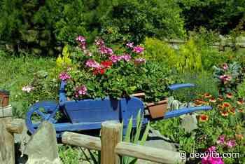 Schubkarre bepflanzen: Ideen für Gartendeko mit Blumen - DEAVITA