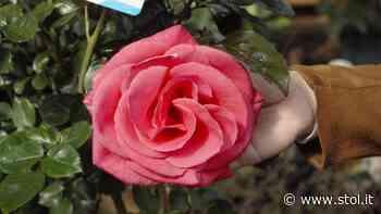 STOL Gartenserie: Rasen, Bäume, Blumen - Alles zum perfekten Farbtupfer im Garten - Stol.it
