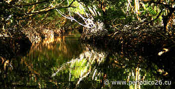 La Isleta, el retorno del manatí y la voluntad de lograr entornos mejor conservados - Periódico 26