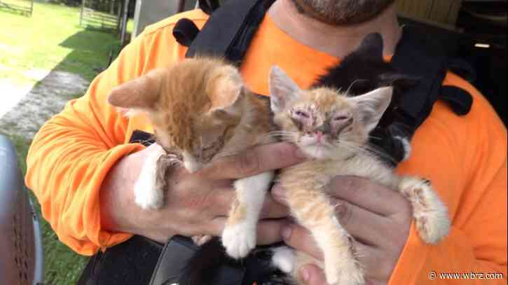 Animals abandoned at construction site of animal shelter