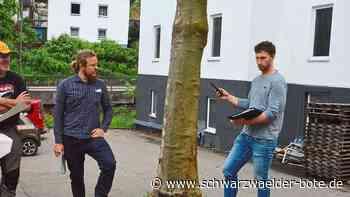 Natur in Lauterbach - Baum fällen oder Pflaster richten? - Schwarzwälder Bote