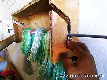 Recife: mulheres se unem e criam fábrica de vassouras de garrafa pet para gerar renda - Brasil de Fato