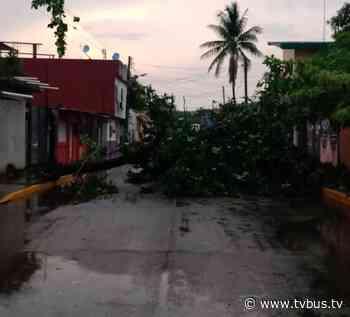 Protección Civil Municipal de Tuxtepec exhorta a tomar precauciones por lluvias - TV BUS Canal de comunicación urbana
