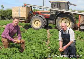Comber earlies will be in stores across Northern Ireland on June 14th - Farming Life