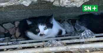 Feuerwehreinsatz in Rinteln: Katzen hinter Wand versteckt - Schaumburger Nachrichten