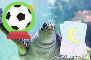 Euro 2020: No predictions from creatures at Brighton Sealife