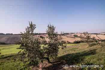 CASTELPLANIO / Immersi nella natura per la Merenda nell'Oliveta - QDM Notizie