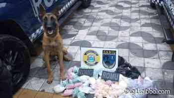 Com ajuda de cão farejador, GCM de Suzano apreende 11 quilos de drogas no Jardim Monte Cristo - G1