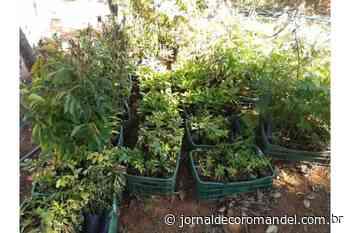 Prefeitura de Coromandel realiza doação de mudas de árvores nativas a produtores rurais - Jornal de Coromandel