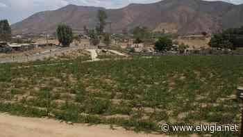 Buscan proteger el Valle de Guadalupe - El Vigia.net