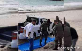Tartaruga marinha é encontrada morta em praia de Arraial do Cabo - O Dia