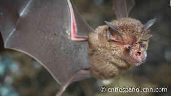 Hallan nuevos coronavirus en murciélagos en China - CNN