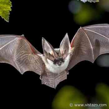 Nuevas variantes del coronavirus parecidas al SARS-CoV-2 fueron encontradas en murciélagos - Vistazo