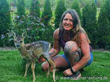 Melli Osterkalb zieht Hirschkalb und Rehkitz auf: Ersatzmutter für Wildtiere - Siegener Zeitung